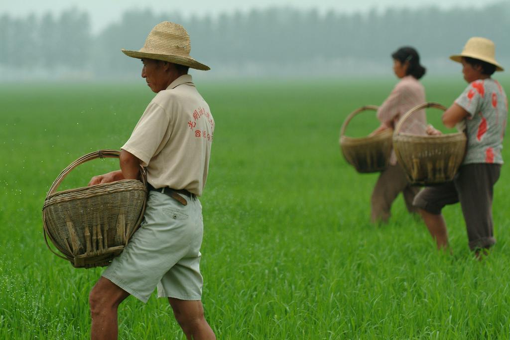 China International Rice Research Institute